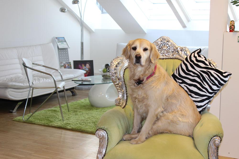 Warum Hunde wie Dieter Bohlen sind